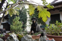 pianta-e-cucciolo-copia