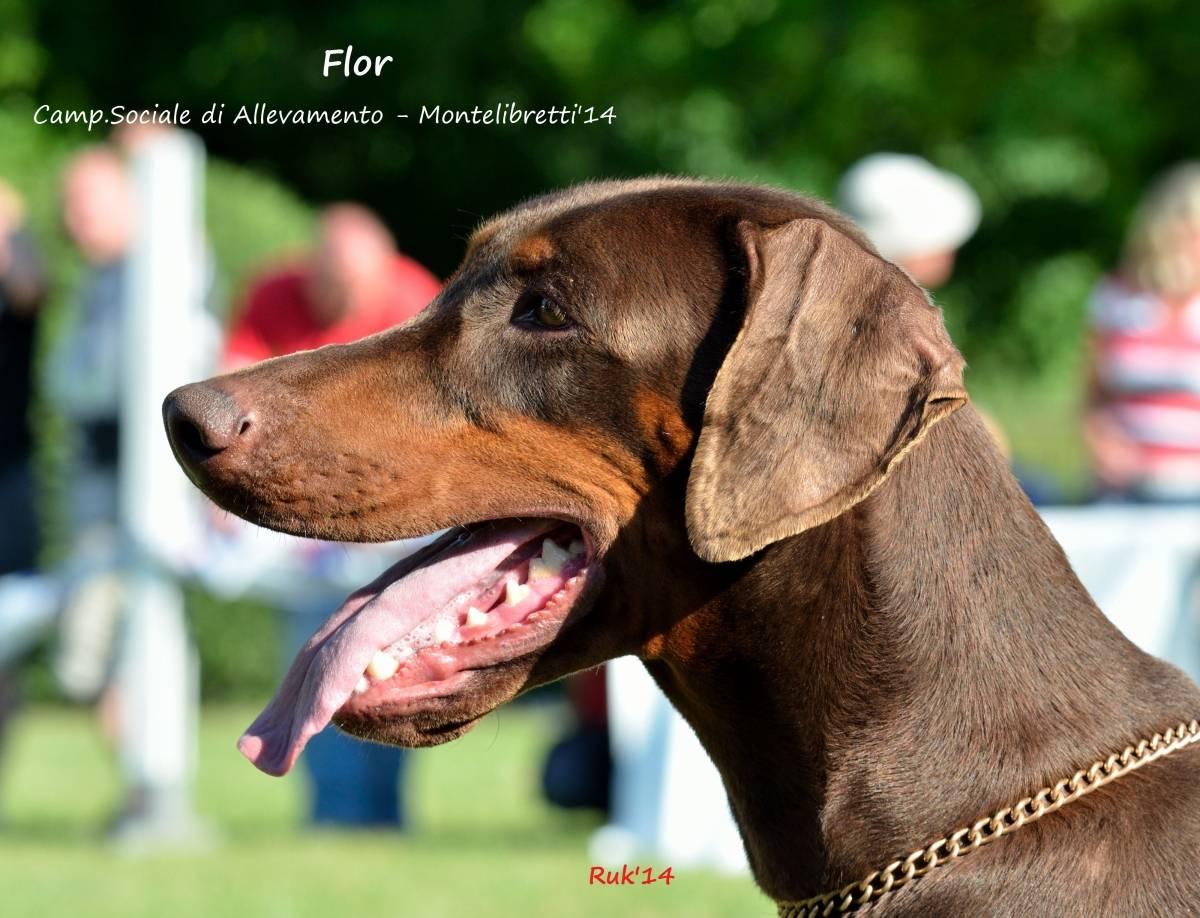 flor Flor Flor 4 1